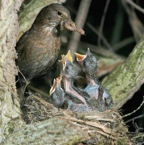 Człowiek opieki – matka