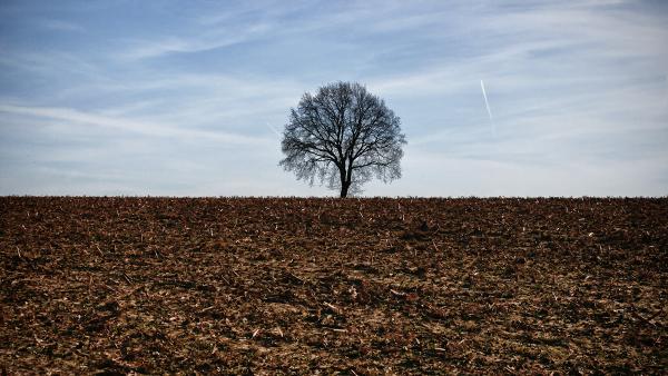 Franciszek: ochrona środowiska obowiązkiem chrześcijan
