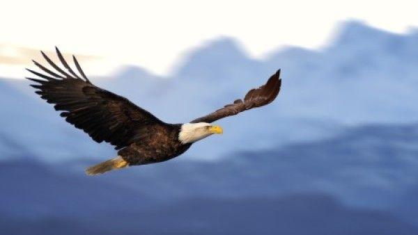 Krok po kroku do... wolności