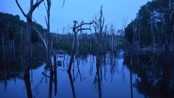 Watykan: Rozmawiano o ochronie Amazonii