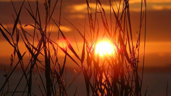 Pieśn słoneczna św. Franciszka (wideo). Posłuchaj!