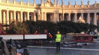 NaPlacu św.Piotra stanęła bożonarodzeniowa choinka