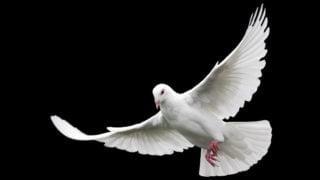 Watykan ogłosił temat papieskiego orędzia naDzień Pokoju