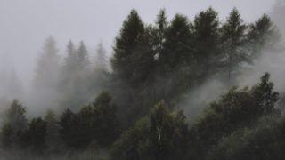 Ciemny las, mgła. Ożałobie